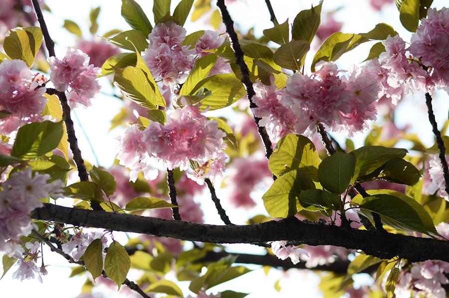Spring Flowers (1)