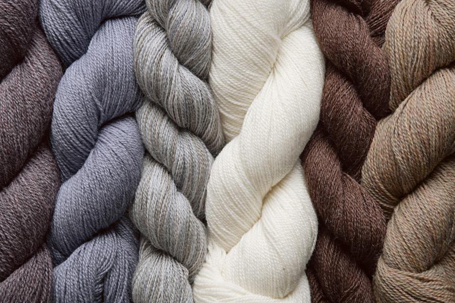 Cottone - Cotton