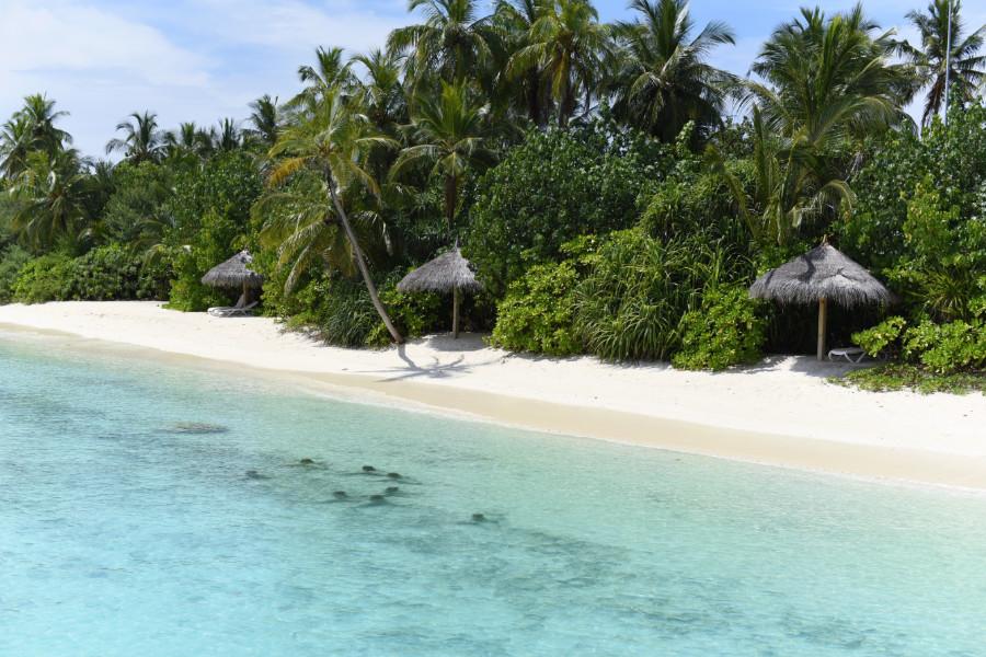 DREAMING MALDIVE